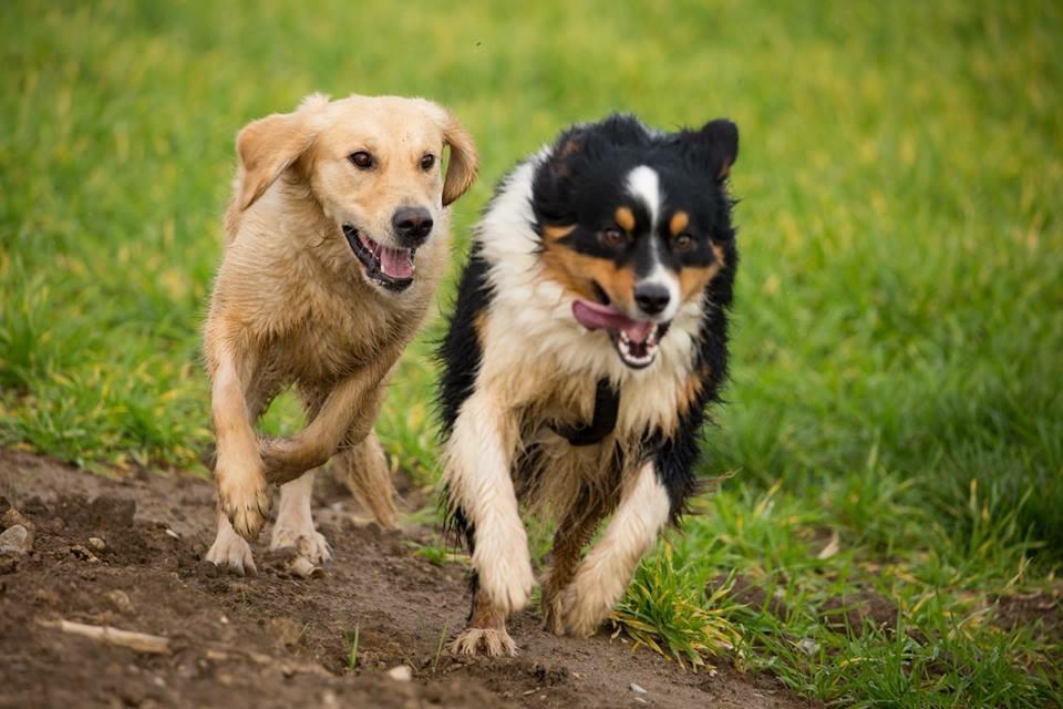 Hund Gruppentraining in Mannheim