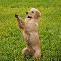Individuelles Hunde Training